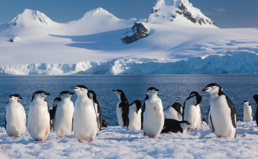 Living like Penguins